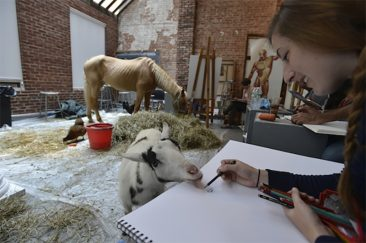 A Unique Art Class Involving Inspiring Animals as the Subject