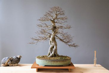 Bonsai Making – A Dying Ancient Art