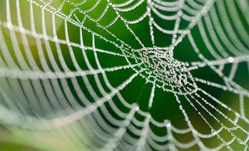 Biomimicry Webs
