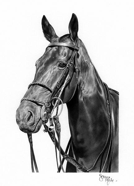 horse image in ballpoint pen
