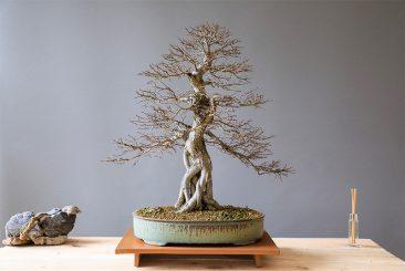 Bonsai Making – A Dying Ancient Art