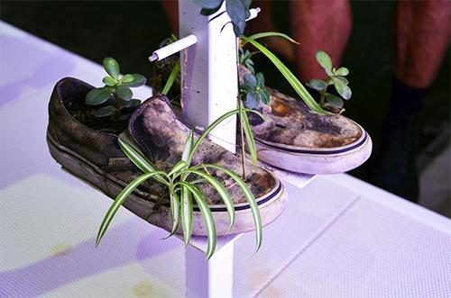 Sneakers Planting