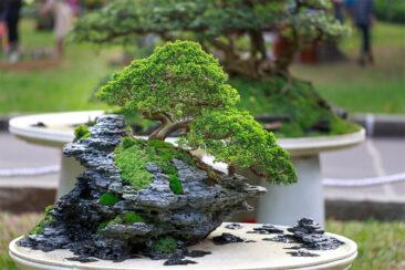 Bonsai: An Ancient Art Form Worth Reviving